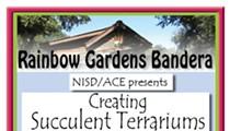 Creating Succulent Terrariums