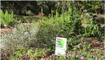 Native Plant Society of Texas San Antonio January Meeting: NPSOT-SA Grant Projects Celebrated