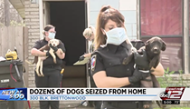 ACS Rescues More Than 20 Dogs From Self-Proclaimed Dog Rescuer's Home in Northeast San Antonio