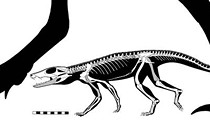 New Species of Ancient 'Ankle Biting' Reptile Named by Witte Museum Paleontologist