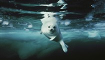 Longtime <i>National Geographic</i> Photographer to Discuss Career, New Ocean-Themed Book at the Tobin Center