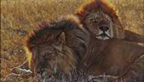 New Exhibit by San Antonio's Witte Museum Uses Artwork to Educate About Big Cats