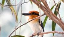 San Antonio Zoo Celebrates Hatching Rare Bird Completely Extinct in the Wild