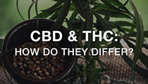 How Are They Different? CBD vs THC