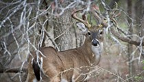 Deer Season Approachin': Don Strange Ranch Hosts Deer Camp