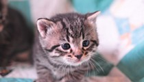 Animal Care Services Lowers Its Adoption Price for Cats This Weekend