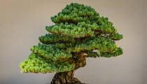 San Antonio Botanical Garden celebrates timeless tradition of bonsai this weekend