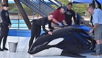SeaWorld San Antonio: Orca Dies from Fungal Infection