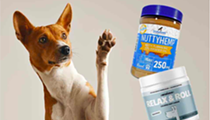 5 BEST CBD Dog Treats & Biscuits (2021)