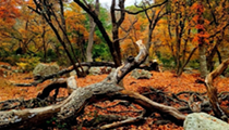 25 Texas parks to see fall colors that are worth a road trip from San Antonio