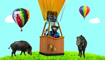 Texas Lawmakers Legalize Hunting Hogs From Hot Air Balloons