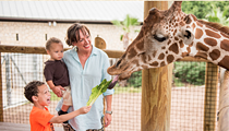 You Could Be Having Breakfast with Giraffes