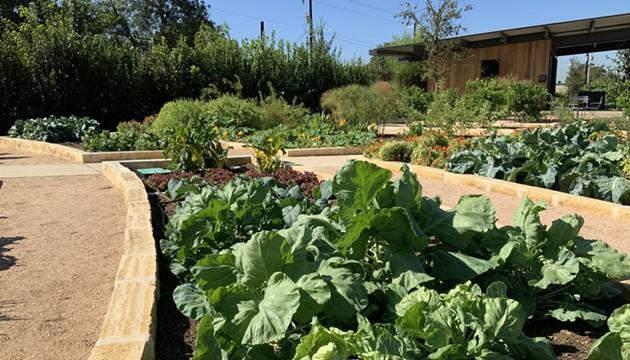 San Antonio Botanical Garden Donating Veggies It Grows to Feed People During Coronavirus Crisis