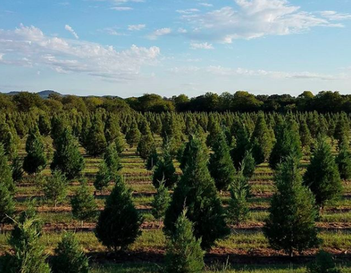 20 Texas Farms Where You Can Choose and Cut Your Own ...