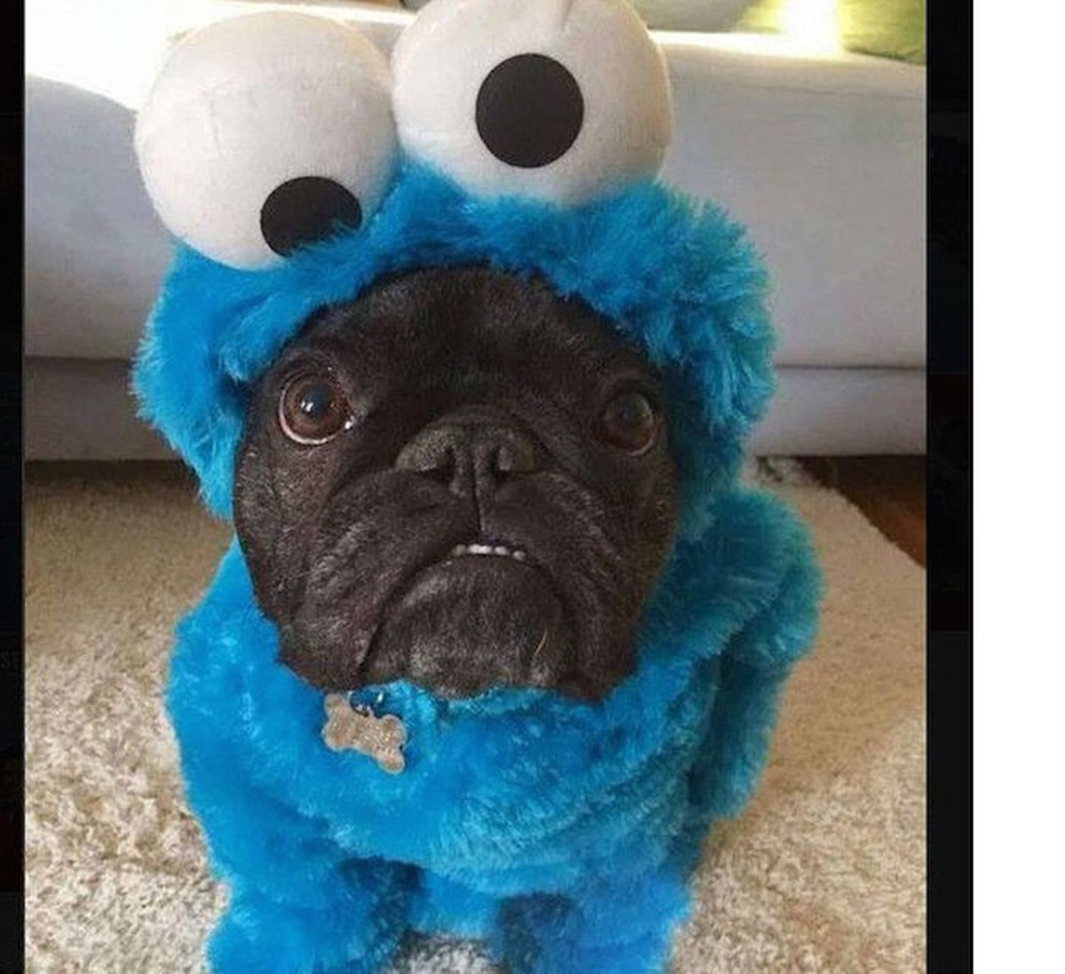 23 adorably genius halloween costumes for pets