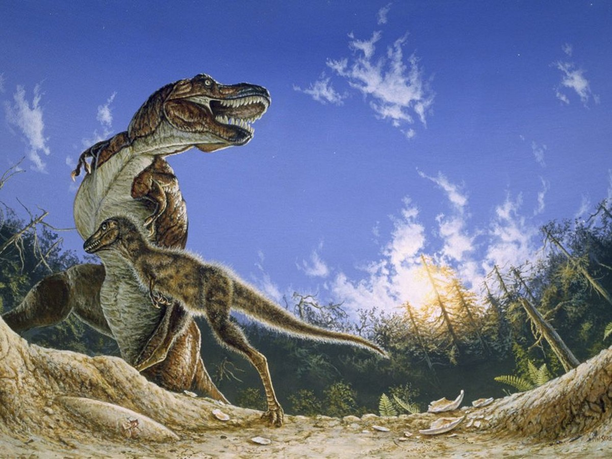 21 Dinosaurs Found In Texas San Antonio Slideshows