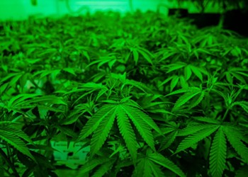 Watered-down expansion of Texas' medical marijuana program poised to become law