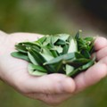 San Antonio Chef Launches Kickstarter for Olive Leaf Tea