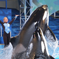 Sea World Laying Off 250 San Antonio Workers Amid Declining Attendance During Pandemic