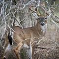 Deer Season Approachin': Don Strange Ranch Hosts Deer Camp