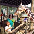 You Can Feed the New Giraffes at the Zoo
