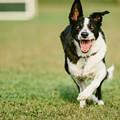 Get a Real Job, San Antonio: Be a Professional Dog Runner