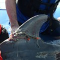 SeaWorld San Antonio Helps Save South Padre Island Dolphin Tangled in Fishing Gear