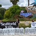 New Halloween Attraction at SeaWorld: An Orca Graveyard