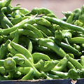 San Antonio's Central Market turns up the heat this week via 26th annual Hatch Chile Fest
