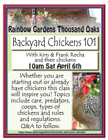 backyard_chickens.jpg