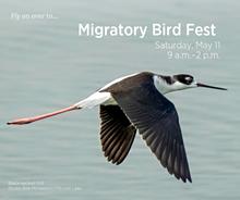 migratory_bird_fest.png