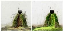 altered_landscape-01.jpg