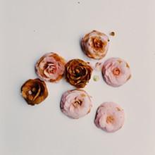 camellia_grouping_3.jpg