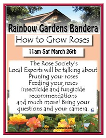 e74fcee6_how_to_grow_roses_bandera_2016.jpg