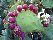 9f0fc0d6_cactus.jpg