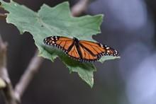 90ff2969_monarcas-35.jpg