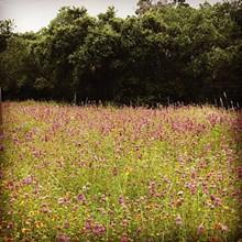 7337e075_wildflowers3.jpg