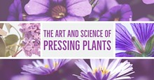 eeb4abf9_the_art_and_science_of_pressing_plants.jpg