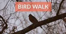 10f3c779_bird_walk.jpg
