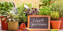 faa7bcd5_herb-garden_2018.png