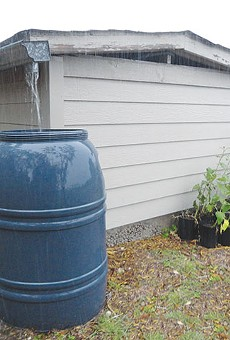 Urban Homesteader: Harvesting water