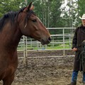 'Wild Horse, Wild Ride' misses chance to examine deeper Mustang story