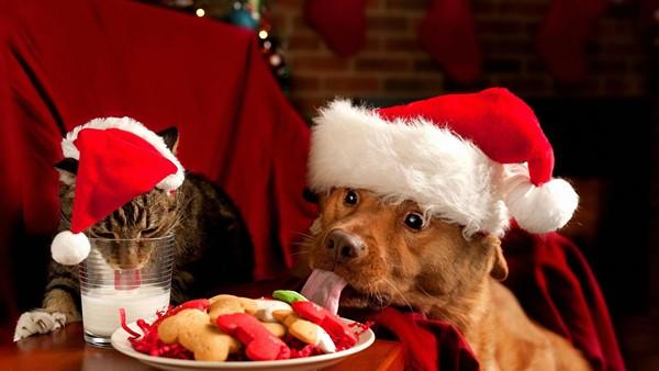 christmas-cat-and-dog-1440x2560.jpeg