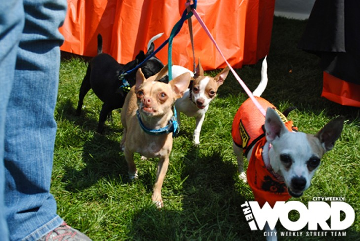 2012 Strut Your Mutt (Photos by Nicole Jaatoul)