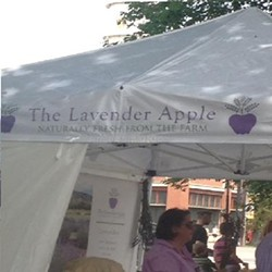 the_lavender_apple.jpg