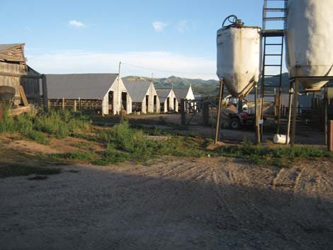 minkfarm.jpg