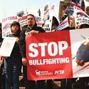 Bullfighter's Nephew Condemns Sport