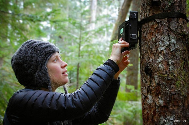 Conservation volunteer Angie Bohlke checks a camera in the Olympic National Forest