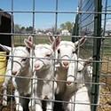 Drake Family Farms