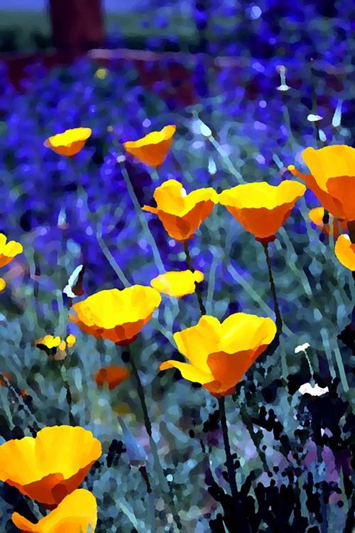 california_poppies.jpg